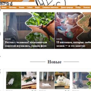 Домашние животные Автонаполняемый сайт на вордпресс №567